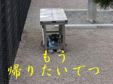 CIMG7483.jpg