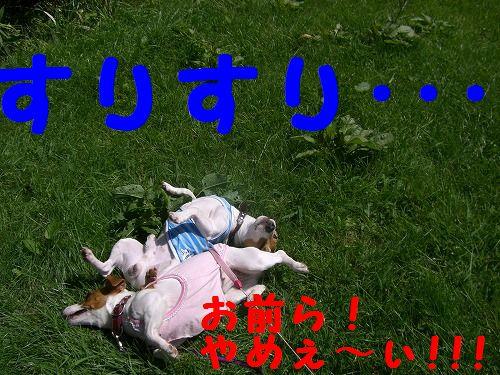 CIMG8323.jpg