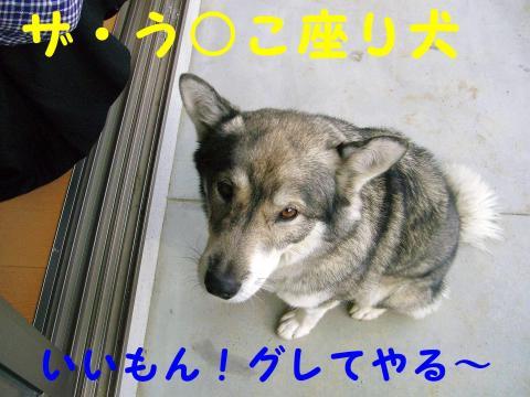 う○こ座り犬