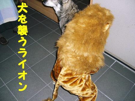 犬を襲うライオン