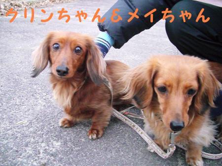 クリンちゃん&メイちゃん