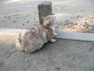 藤森神社 猫