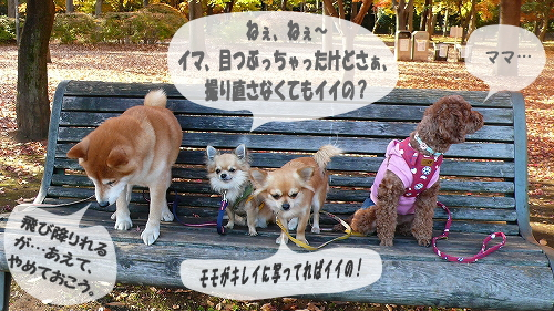 image_20071220125938.jpg