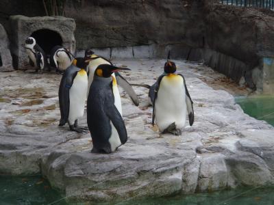 上野動物園4