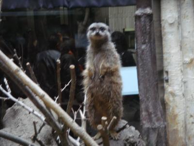 上野動物園7