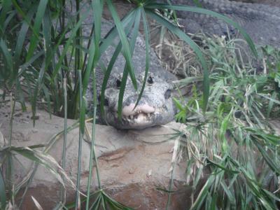 上野動物園10