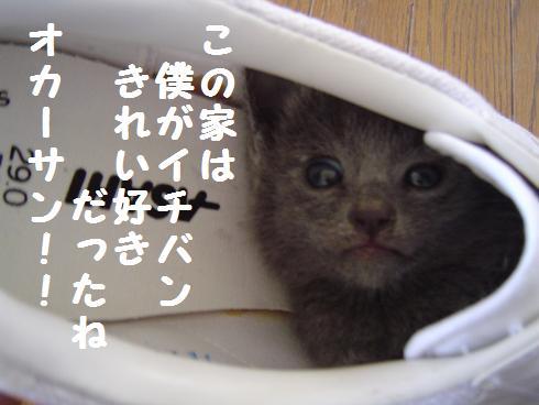 055kireizuki.jpg
