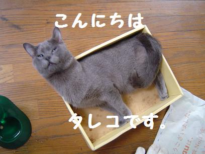 tareko.jpg
