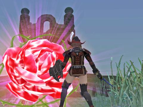 今日も西サルタ(過去)に薔薇の花が咲きます!