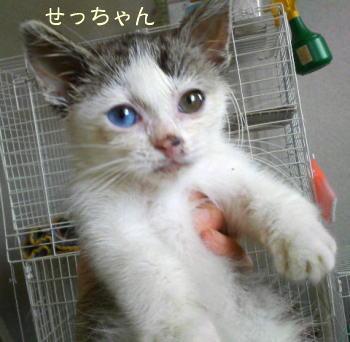 setsuko1.jpg