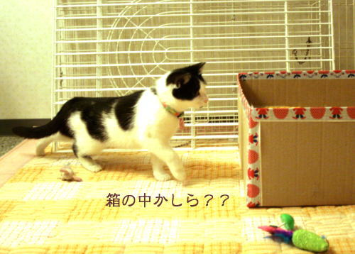 toko18.jpg