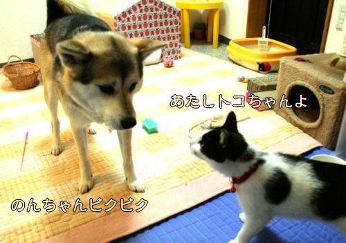 toko32.jpg