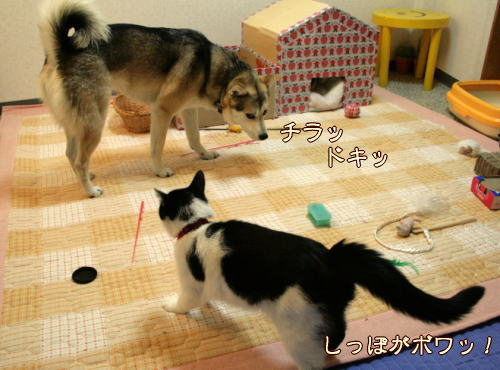 toko33.jpg