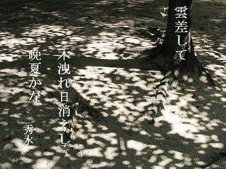 晩夏①01sd