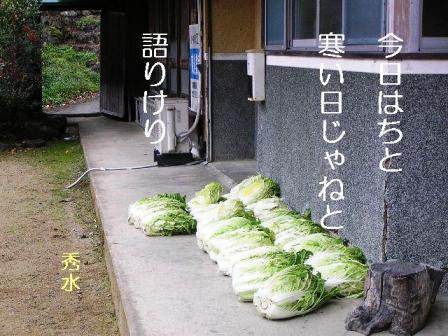 SD白菜寒い