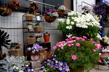 わが家のお花