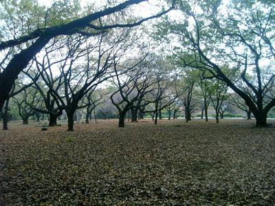 桜園地(秋)