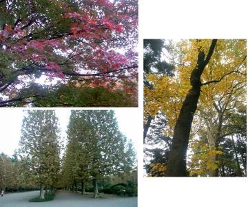 秋ですねぇ