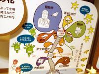 菌ってつくけど大腸菌、納豆菌、乳酸菌はバクテリアの仲間なんですよ