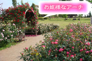 刈谷市 貝塚 公園 薔薇 刈谷駅