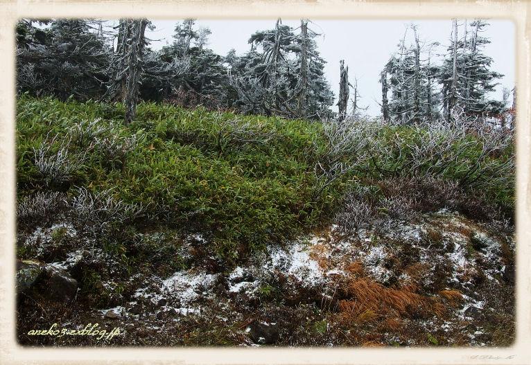 八幡平に雪2