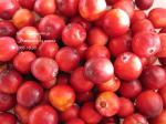 cranberry2.jpg