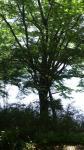 九頭龍神社の木