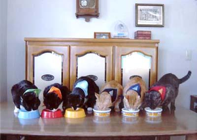 cats2_20090406165643.jpg