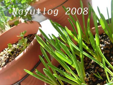 2008ブログ 087