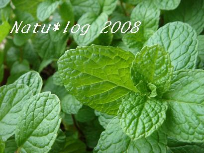 2008ブログ 109