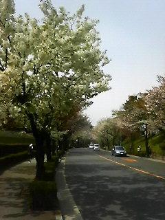 20090405c.jpg