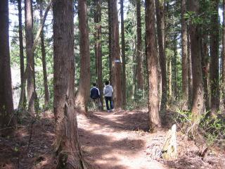 癒しの森-1