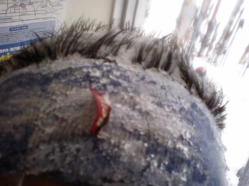 逆毛と雪の割合、5:5