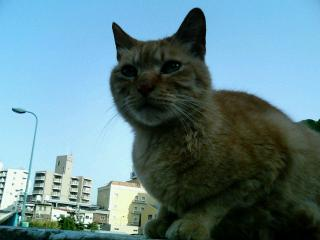 橋の上の猫