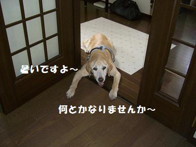 CIMG3070.jpg