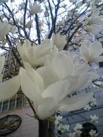 06-04-04_15-02~00.jpg