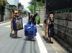 荷物持ち犬