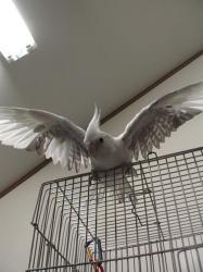 羽を伸ばす?!