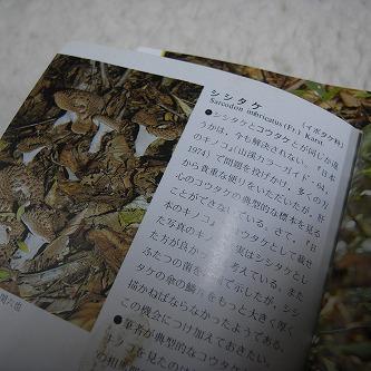 きのこの世界・・・森のおくりびと。10干してうどんの出汁に・・・シシタケ