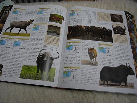 """""""世界動物大図鑑""""02今度は日本固有種の図鑑が欲しい"""