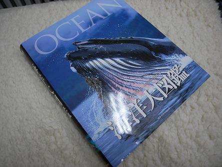 """""""海洋大図鑑""""01クジラよ、オマエは美しい!そして・・・・旨い!"""