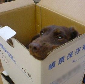 箱なら何でもいいんです。