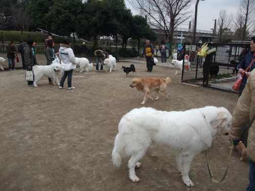 2009_0304pireohukai0025.jpg
