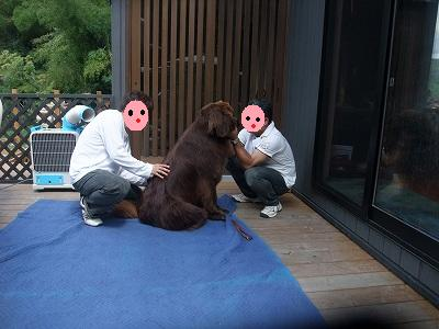 2009_0906seitai0018a.jpg