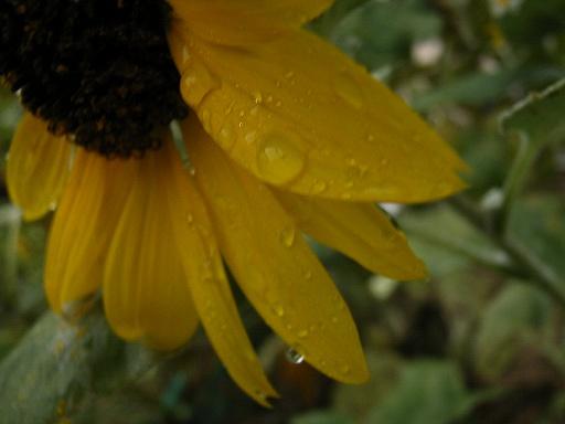 RainyTime38.jpg