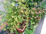 うちの植木鉢