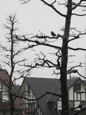 bird090227.jpg