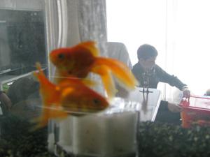 fish090329.jpg
