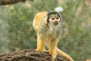 monkey090528.jpg