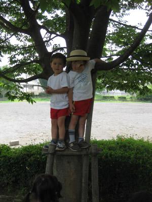 tree2090626.jpg